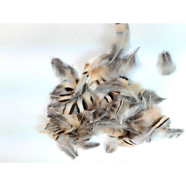 Petites plumes de perdrix pour déco, bijoux...
