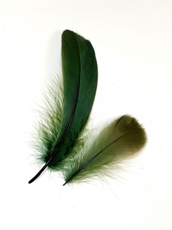 Plumes vertes pour déco, activités manuelles, costumes...